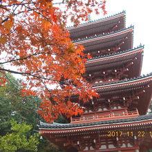紅葉と五重塔は絵になりますね!