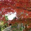 鮮やかな秋の紅葉に訪れた観光客は大喜びでした