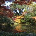 写真:近衛池 (京都御苑内)