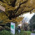 写真:東京大学医科学研究所