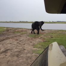 象さんを見るならここ