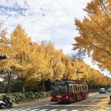 銀杏並木と赤れんがバスの組み合わせが美しい