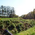 写真:アオシマナイ遺跡