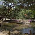写真:中蓮池