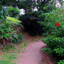 南国らしいいろいろな植物