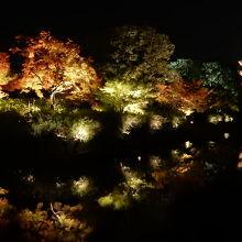 東寺ライトアップ(紅葉)