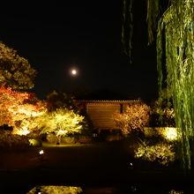 東寺の境内と満月