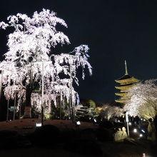 東寺ライトアップ(桜の季節)