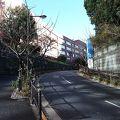 写真:山王切通坂