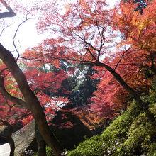 素晴らしい紅葉が堪能できるお寺