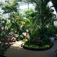 宮交ボタニックガーデン青島の大温室です。