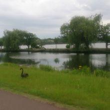 鳥たちの水辺