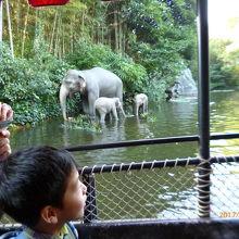 ジャングルクルーズでは沢山の動物に会えます