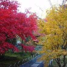 壇林寺の紅葉