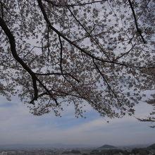 4月中旬には桜も咲きます