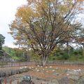 写真:鶴ヶ城御三階跡