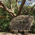 写真:おきなわワールド文化王国 玉泉洞