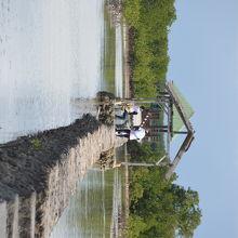 マクタン島から小舟で20分15ペソで行けるオランゴ島にあるバードウォッチングができる干潟
