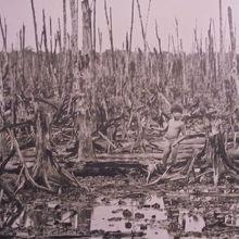 枯葉剤によって死の大地と化した森。
