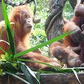 写真:シンガポール動物園