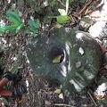 写真:グアム探検トレッキング