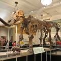 写真:アメリカ自然史博物館