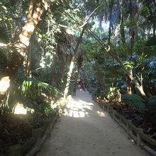 ジャングルのようでおもしろい