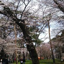 桜が満開の季節。