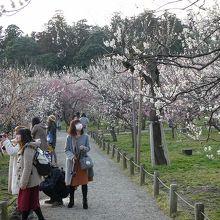 桜ほど鮮やかさがないんだよなあ