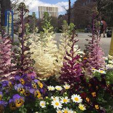 浜町公園のお花