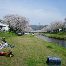 春には音羽川堤に桜並木
