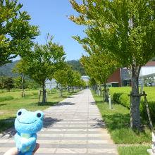 正面入口へ続く桂の並木道