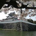 写真:岸和田城