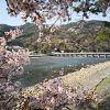 嵐山の渡月橋は桜が見頃です