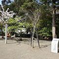 写真:実朝桜