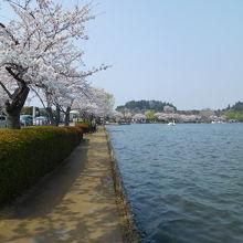 四季折々楽しめるのですが、なかでも桜の時期は最高です。