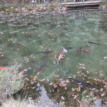何故か、絵のような池ではありませんでした。