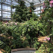 40℃の温室に南国の植物が