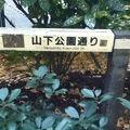 写真:横浜山下公園通り