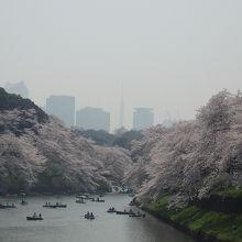 桜を見に千鳥が淵公園と千鳥が淵緑道を歩きました