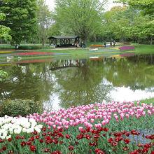 水辺に咲くチューリップが美しかったです