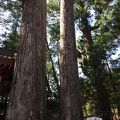 日光二荒山神社の御神木