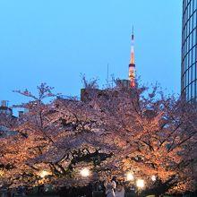 今年も夜桜見物