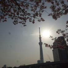 東京スカイツリーのシルエットと桜の花