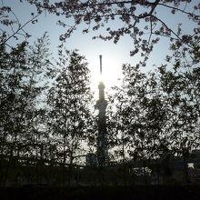 隅田公園の東武・スカイツリー線近くから見える東京スカイツリー