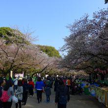 上野動物園側からも沢山の人々がおし寄せています