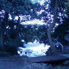 川のほとりが涼しげです。