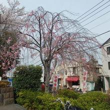 世田谷観桜(3)散策で松陰神社に行きました