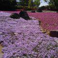 写真:花の郷 滝谷花しょうぶ園