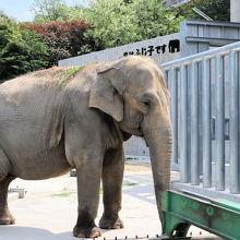 無料で象さんが見られます